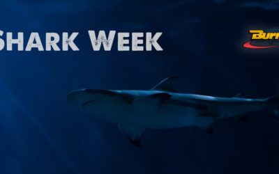 Shark Week and Your Supply Chain